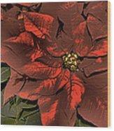 Antiqued Poinsettia Wood Print