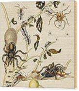 Ants Spiders Tarantula And Hummingbird Wood Print