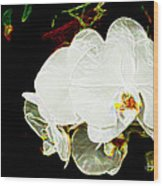 Aos White Orchid 1 Wood Print