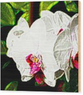 Aos White Orchid 2 Wood Print