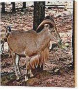 Aoudad Plus 2 Wood Print