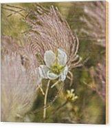 Apache Tears Wood Print