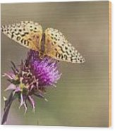 Aphrodite Butterfly On A Purple Thistle Wood Print