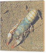 Appalachian Blue Crayfish Wood Print