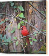 Appalachian Cardinal Wood Print