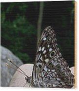 Appalachian Empress Wood Print
