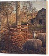Appalachian Sheep Wood Print by William Schmid