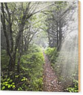 Appalachian Trail Wood Print by Debra and Dave Vanderlaan