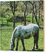 Appaloosa In Pasture Wood Print