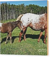 Appaloosa Mamma And Baby Wood Print