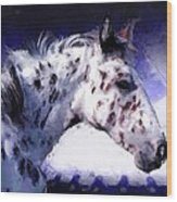 Appaloosa Pony Wood Print by Roger D Hale