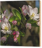 Apple Blossom 3 Wood Print