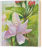 Apple Blossom And Buds Wood Print