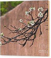 Apple Blossom Branch Wood Print