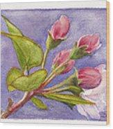 Apple Blossom Buds Wood Print