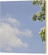 Apple Blossom In Spring Blue Sky Wood Print