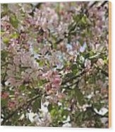 Apple Blossom Wood Print