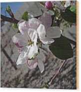 Apple Blossoms 3 Wood Print