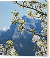 Apple Blossoms Frame The Rockies Wood Print