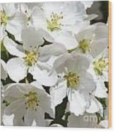 Apple Blossoms In Spring Wood Print