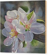 Apple Blossoms In Sunlight Wood Print