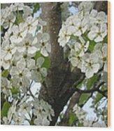 Apple Blossoms Wood Print by Randi Shenkman