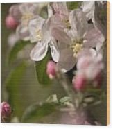 Apple Flowers Wood Print