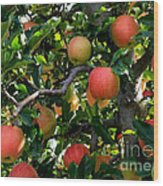 Apple Harvest - Digital Painting Wood Print