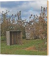 Apple Orchard 1 Wood Print