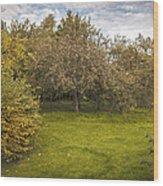 Apple Orchard Wood Print