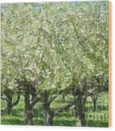 Apple Orchard Wood Print