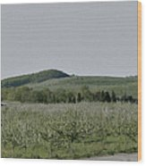 Apple Orchards In Pennsylvania Wood Print