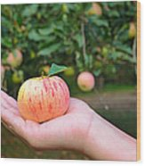 Apple Pick Wood Print