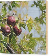 Apple Pickin' Time Wood Print