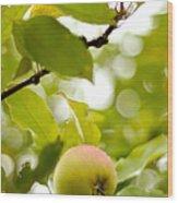 Apple Taste Of Summer 2 Wood Print