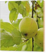 Apple Taste Of Summer 3 Wood Print