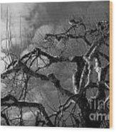 Apple Tree Bw Wood Print