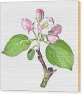 Apple Tree Flower  Wood Print