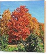 Apple Tree In September Wood Print