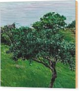 Apple Trees By The Sea Trouville Wood Print
