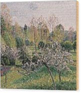 Apple Trees In Blossom Wood Print