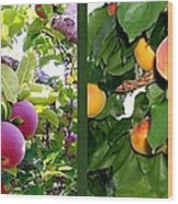 Apples And Apricots Wood Print by Will Borden