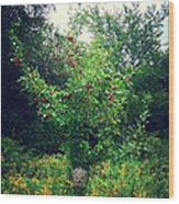 Apples And Hornets Wood Print