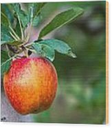 Apples Hanging In Orchard Wood Print