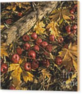 Apples In Fall Wood Print