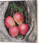 Apples In Tree Wood Print