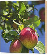 Apples On Tree Wood Print