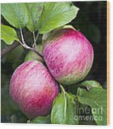 2 Apples On Tree Wood Print