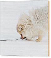 Apport Wood Print by Jenny Rainbow