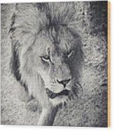 Approaching Lion Wood Print